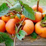 柿の栄養を増やす方法