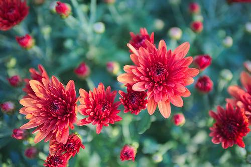 生け花を長持ちさせるコツ