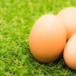 あさイチ卵や焼きの作り方