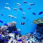 マツコの知らない世界のおすすめ水族館