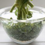 ブロッコリーの正しい洗い方。ソレダメで話題、虫やほこりが取れる!