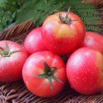 トマトの冷製中華ダレのレシピ・作り方