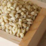 もち麦が内臓脂肪を減らす