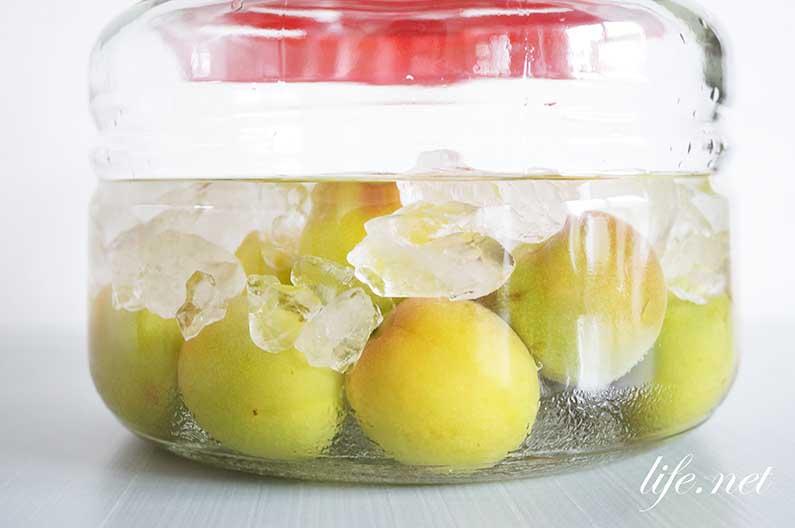 あさイチの絶品梅酒の造り方。プロが教える分量とコツを紹介。