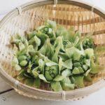 男子ごはんウドとふきのとうの春サラダのレシピ。おつまみにも。