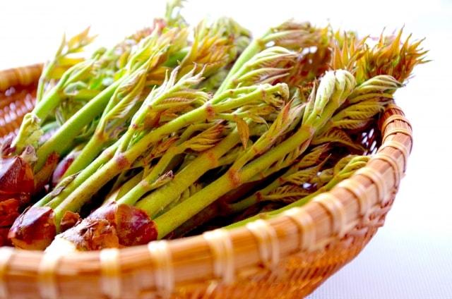 タラの芽の健康効果と栄養