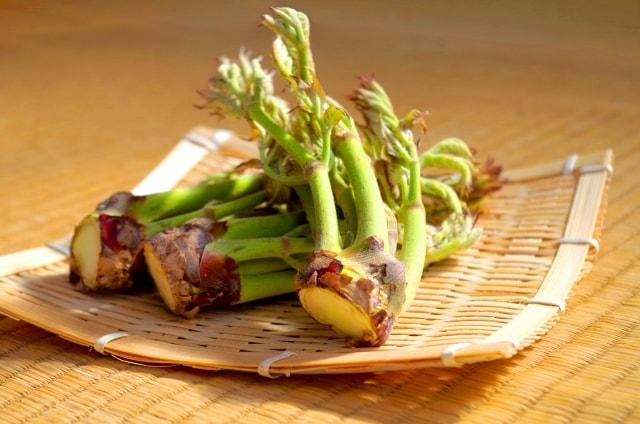 この差ってなんですか?タラの芽のレシピ。