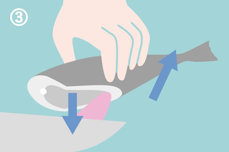 アジの下処理の仕方、内臓の取り方