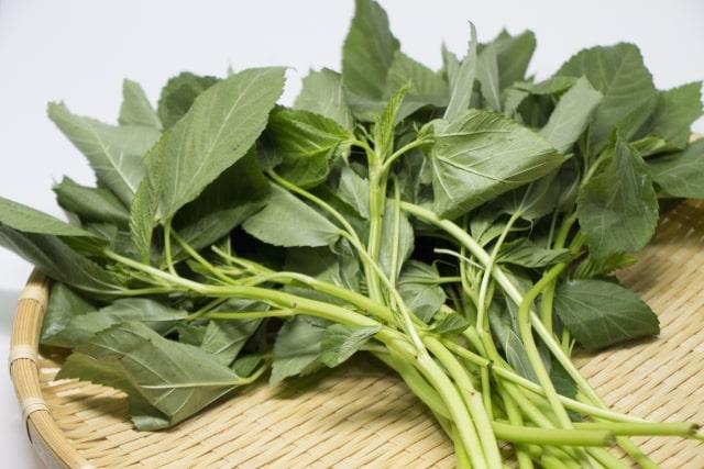 モロヘイヤの茎のきんぴらのレシピ。あさイチで紹介の食べ方。