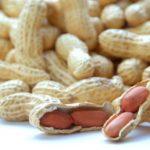 ピーナッツもやしがダイエットに最強。名医のTHE太鼓判で話題に。