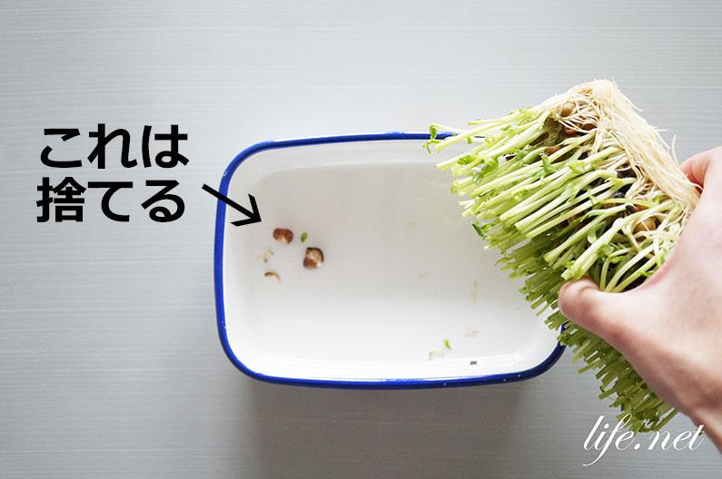 豆苗の育て方と再生栽培方法。切る位置や水加減のコツを紹介。