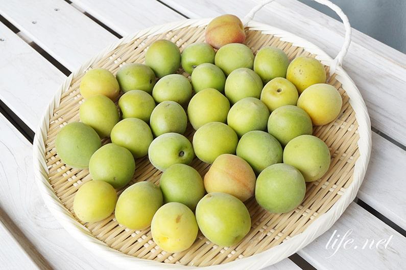 梅の追熟のやり方。青梅を完熟梅にする簡単な方法。